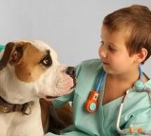 4 cursos grátis de Veterinária