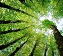 Mais de 200 livros gratuitos sobre meio ambiente
