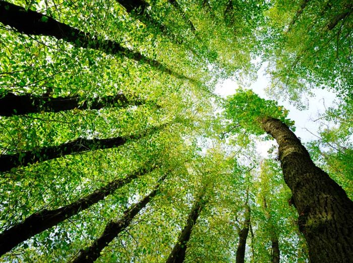 meio ambiente e saude pdf
