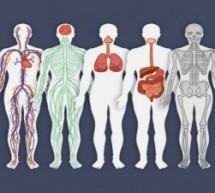 8 sites gratuitos para aprender sobre o corpo humano