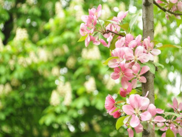 plantas-e-flores