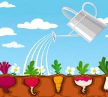Cursos e videoaulas sobre como fazer uma horta caseira