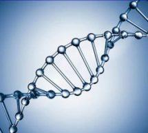 Vídeo aula: DNA