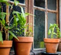 SUS disponibiliza curso grátis e online de plantas medicinais e fitoterápicos