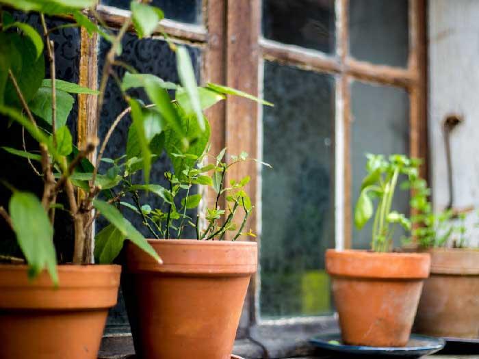 curso-plantas-medicinais-e-fitoterapicos