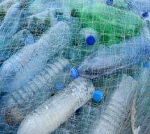 Cursos e materiais gratuitos online sobre o meio ambiente